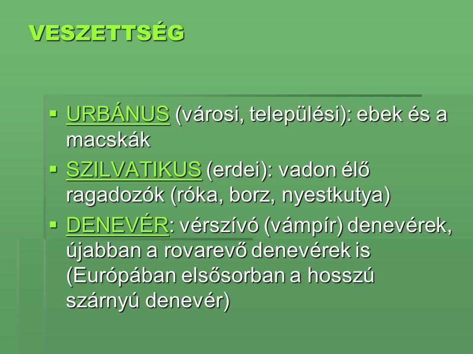 VESZETTSÉG  URBÁNUS (városi, települési): ebek és a macskák URBÁNUS  SZILVATIKUS (erdei): vadon élő ragadozók (róka, borz, nyestkutya) SZILVATIKUS 