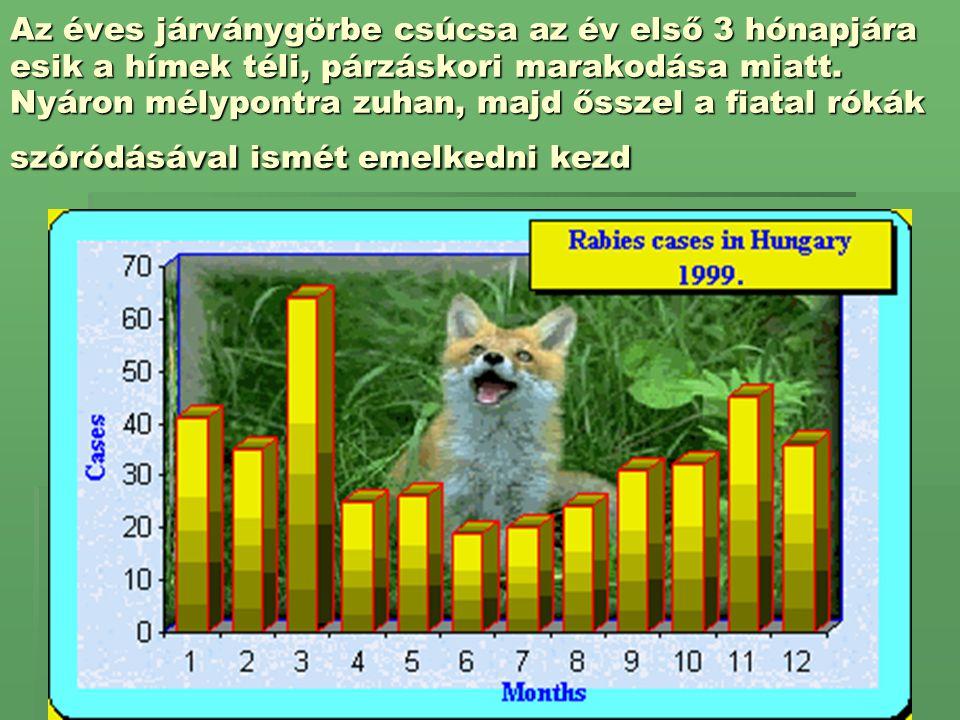 Az éves járványgörbe csúcsa az év első 3 hónapjára esik a hímek téli, párzáskori marakodása miatt. Nyáron mélypontra zuhan, majd ősszel a fiatal rókák