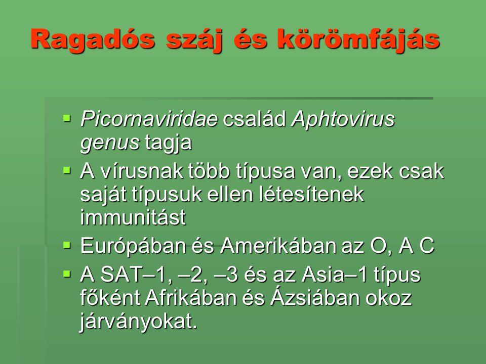 Ragadós száj és körömfájás  Picornaviridae család Aphtovirus genus tagja  A vírusnak több típusa van, ezek csak saját típusuk ellen létesítenek immu