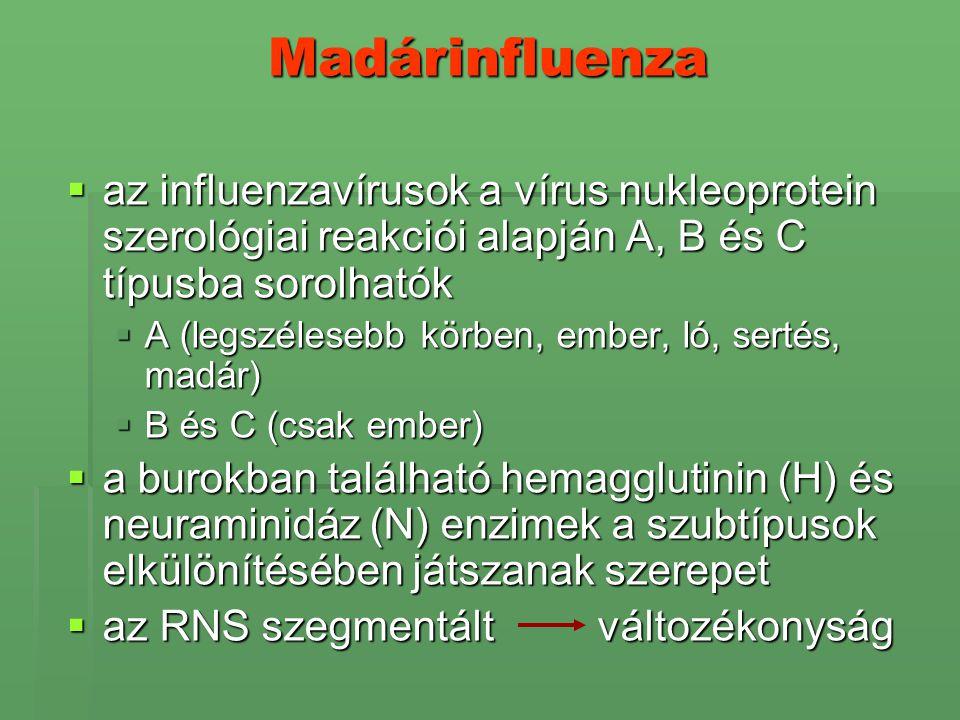 Madárinfluenza  az influenzavírusok a vírus nukleoprotein szerológiai reakciói alapján A, B és C típusba sorolhatók  A (legszélesebb körben, ember,