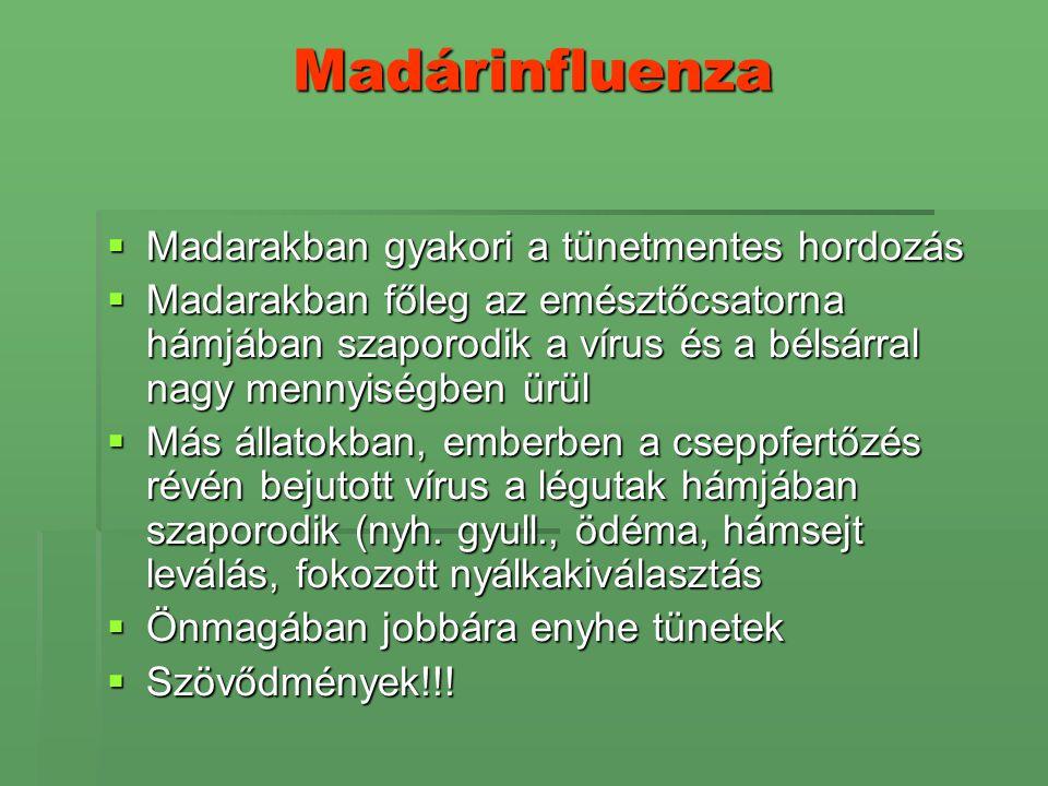 Madárinfluenza  Madarakban gyakori a tünetmentes hordozás  Madarakban főleg az emésztőcsatorna hámjában szaporodik a vírus és a bélsárral nagy menny