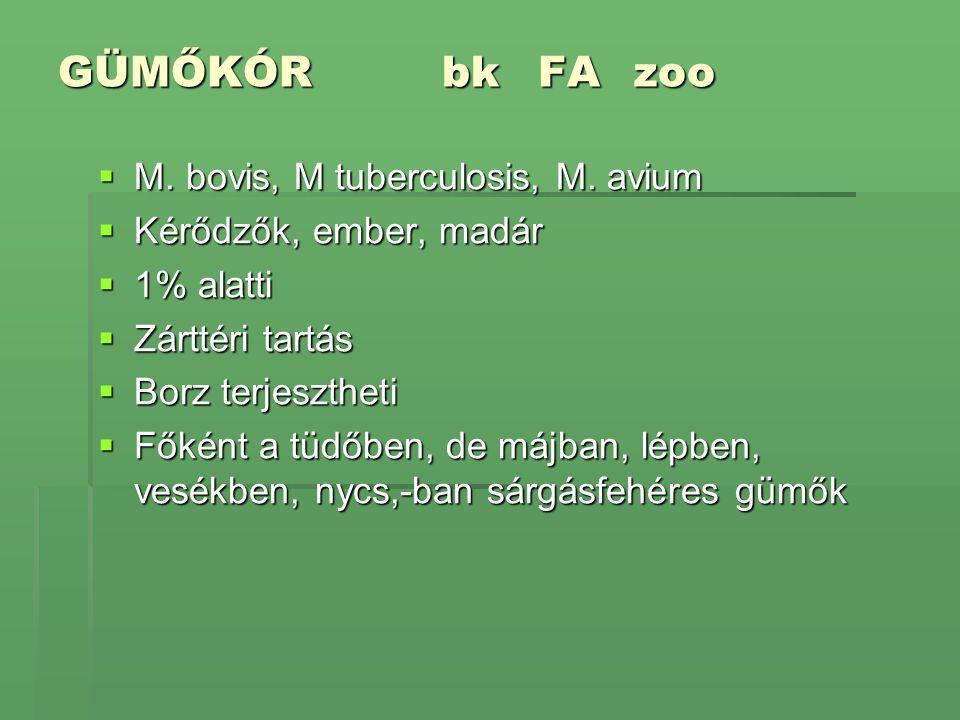 GÜMŐKÓRbkFAzoo  M. bovis, M tuberculosis, M. avium  Kérődzők, ember, madár  1% alatti  Zárttéri tartás  Borz terjesztheti  Főként a tüdőben, de