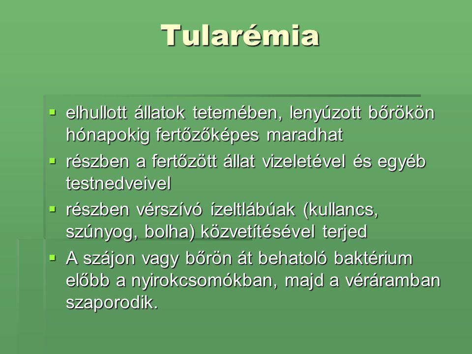 Tularémia  elhullott állatok tetemében, lenyúzott bőrökön hónapokig fertőzőképes maradhat  részben a fertőzött állat vizeletével és egyéb testnedvei