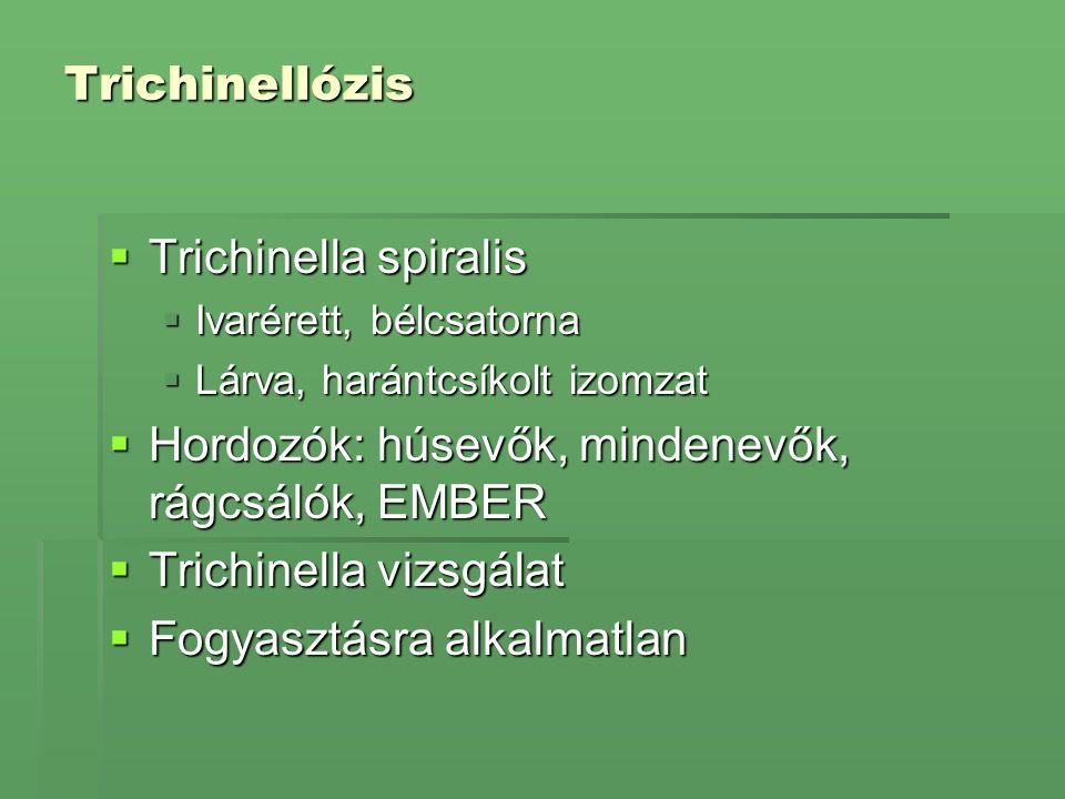 Trichinellózis  Trichinella spiralis  Ivarérett, bélcsatorna  Lárva, harántcsíkolt izomzat  Hordozók: húsevők, mindenevők, rágcsálók, EMBER  Tric