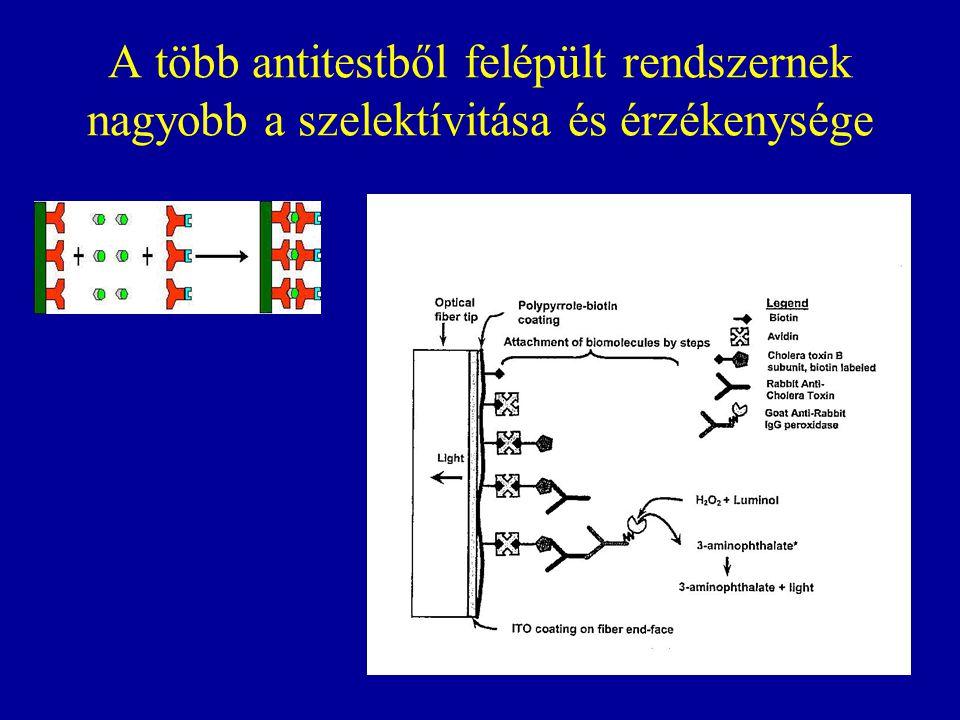 A több antitestből felépült rendszernek nagyobb a szelektívitása és érzékenysége