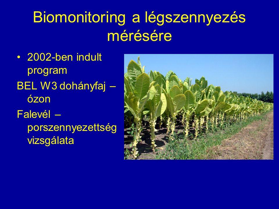Biomonitoring a légszennyezés mérésére 2002-ben indult program BEL W3 dohányfaj – ózon Falevél – porszennyezettség vizsgálata