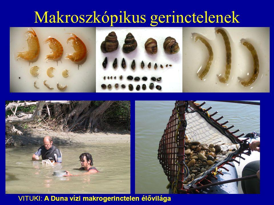 Makroszkópikus gerinctelenek VITUKI: A Duna vízi makrogerinctelen élővilága