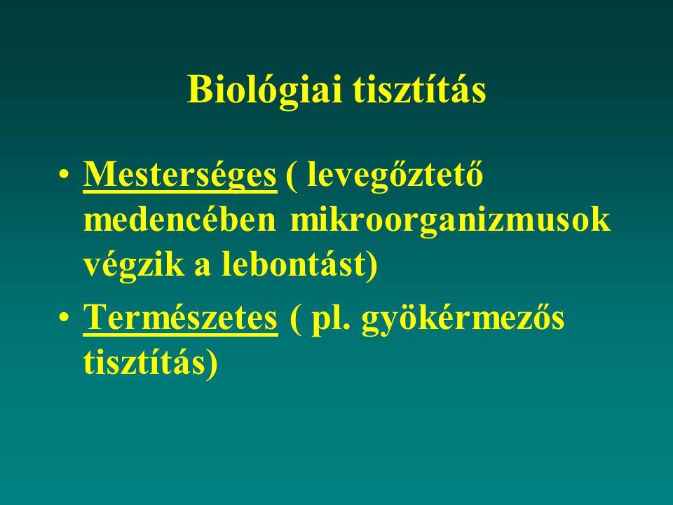 Biológiai tisztítás Mesterséges ( levegőztető medencében mikroorganizmusok végzik a lebontást) Természetes ( pl. gyökérmezős tisztítás)