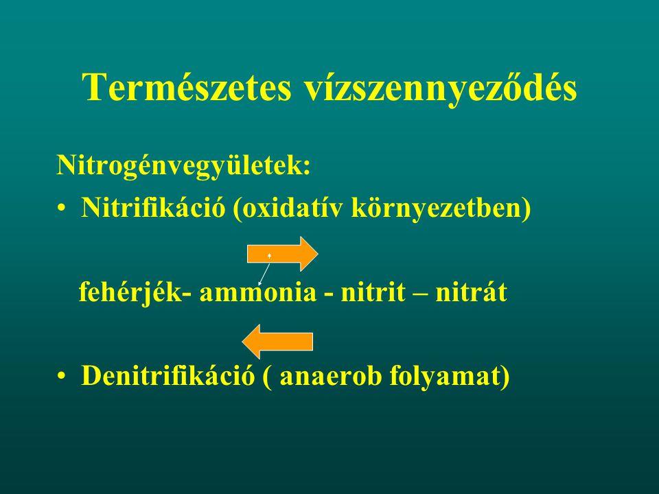 Természetes vízszennyeződés Nitrogénvegyületek: Nitrifikáció (oxidatív környezetben) fehérjék- ammonia - nitrit – nitrát Denitrifikáció ( anaerob foly