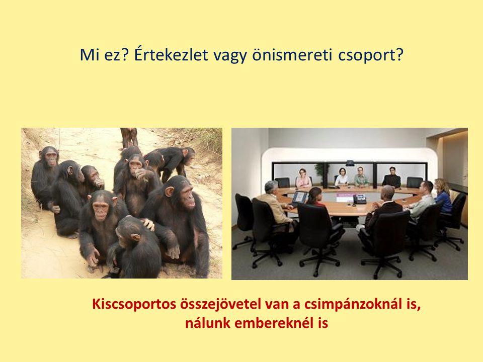 Kiscsoportos összejövetel van a csimpánzoknál is, nálunk embereknél is Mi ez? Értekezlet vagy önismereti csoport?