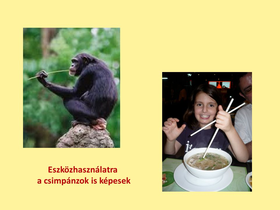 Családi élet van a csimpánzoknál is és nálunk is (nálunk éppen visszaszorulóban)
