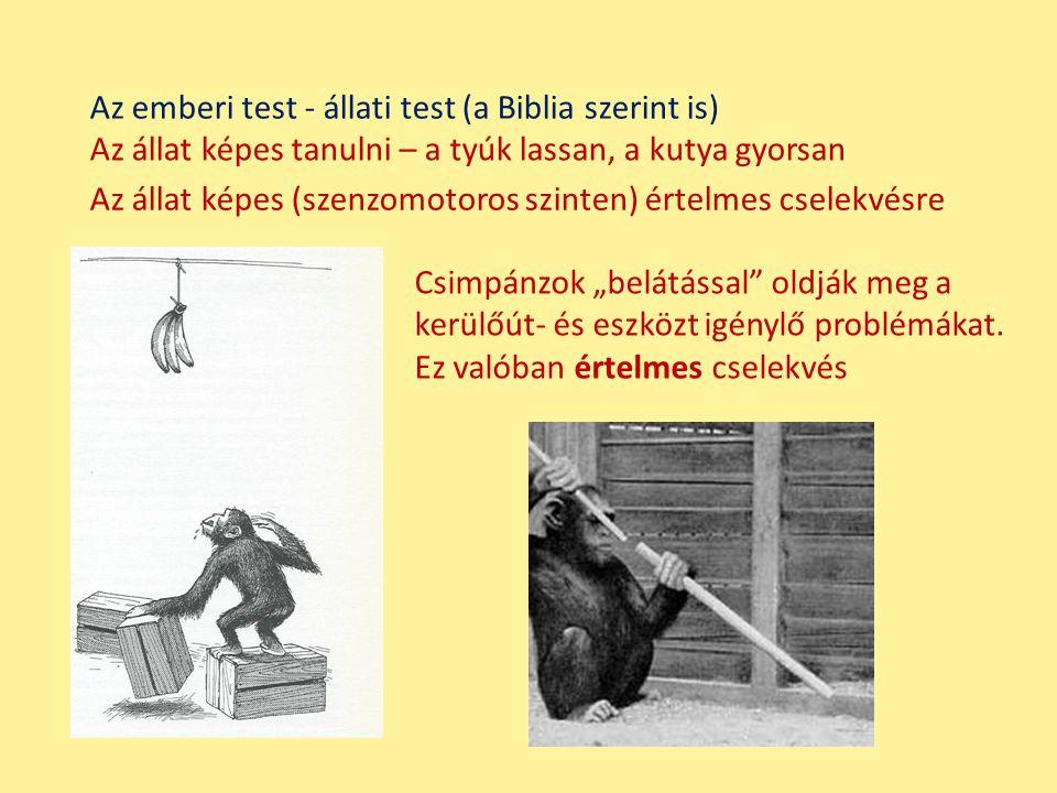 """Az állat képes tanulni – a tyúk lassan, a kutya gyorsan Az állat képes (szenzomotoros szinten) értelmes cselekvésre Csimpánzok """"belátással"""" oldják meg"""