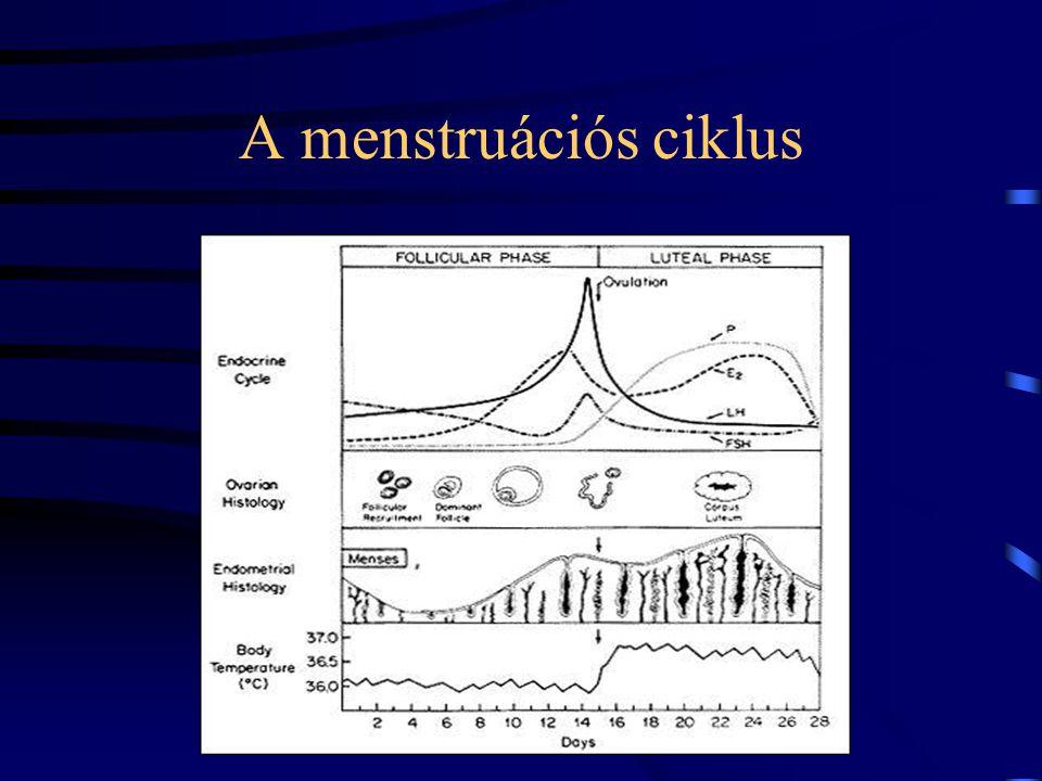 A menstruációs ciklus
