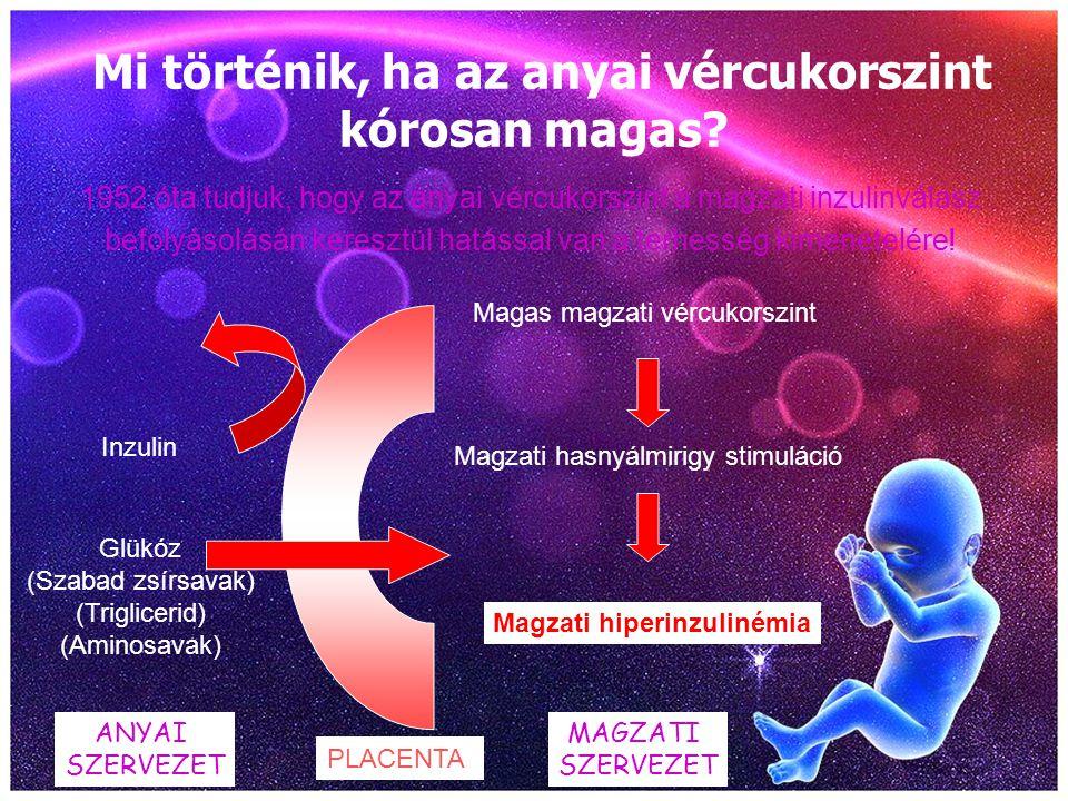 Mi történik, ha az anyai vércukorszint kórosan magas? 1952 óta tudjuk, hogy az anyai vércukorszint a magzati inzulinválasz befolyásolásán keresztül ha