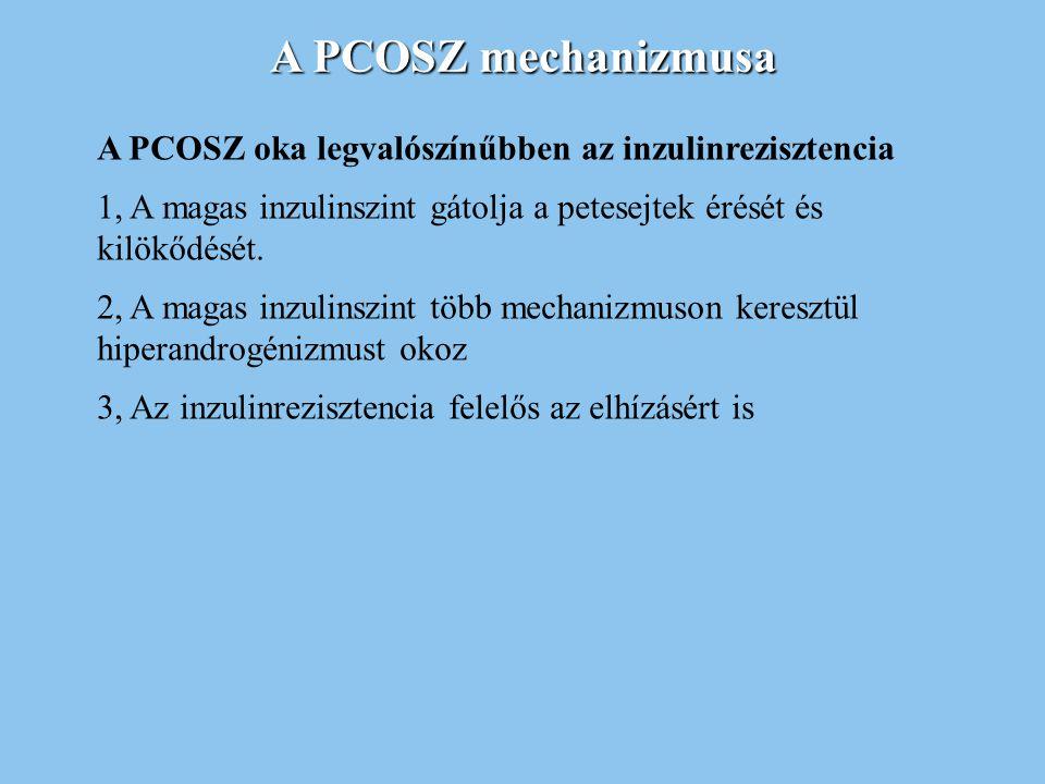 A PCOSZ mechanizmusa A PCOSZ oka legvalószínűbben az inzulinrezisztencia 1, A magas inzulinszint gátolja a petesejtek érését és kilökődését. 2, A maga
