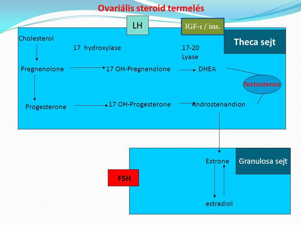 Cholesterol Pregnenolone Progesterone 17 OH-Pregnenolone 17 OH-Progesterone DHEA Androstenandion 17-20 Lyase 17 hydroxylase Theca sejt Estrone estradi
