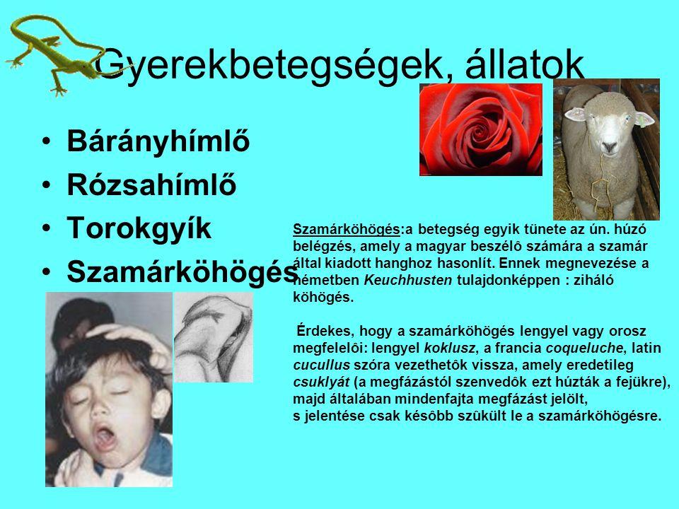 Gyerekbetegségek, állatok Bárányhímlő Rózsahímlő Torokgyík Szamárköhögés Szamárköhögés:a betegség egyik tünete az ún.