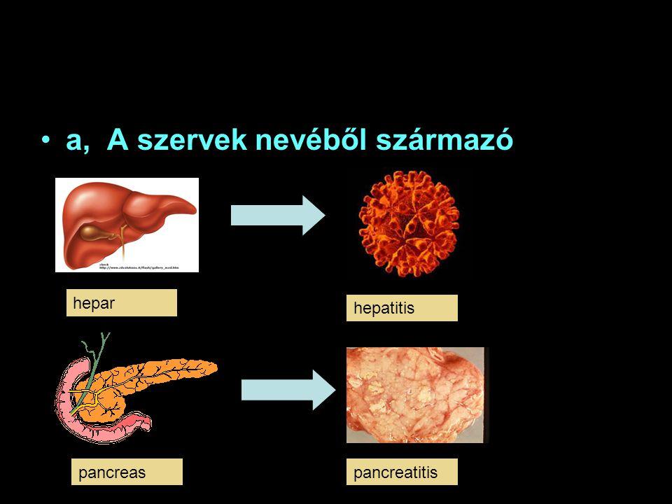 a, A szervek nevéből származó hepar hepatitis pancreaspancreatitis