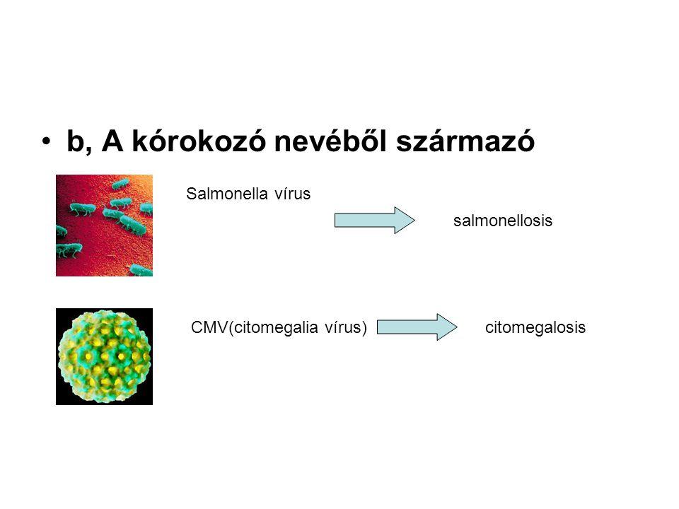 b, A kórokozó nevéből származó Salmonella vírus CMV(citomegalia vírus) salmonellosis citomegalosis
