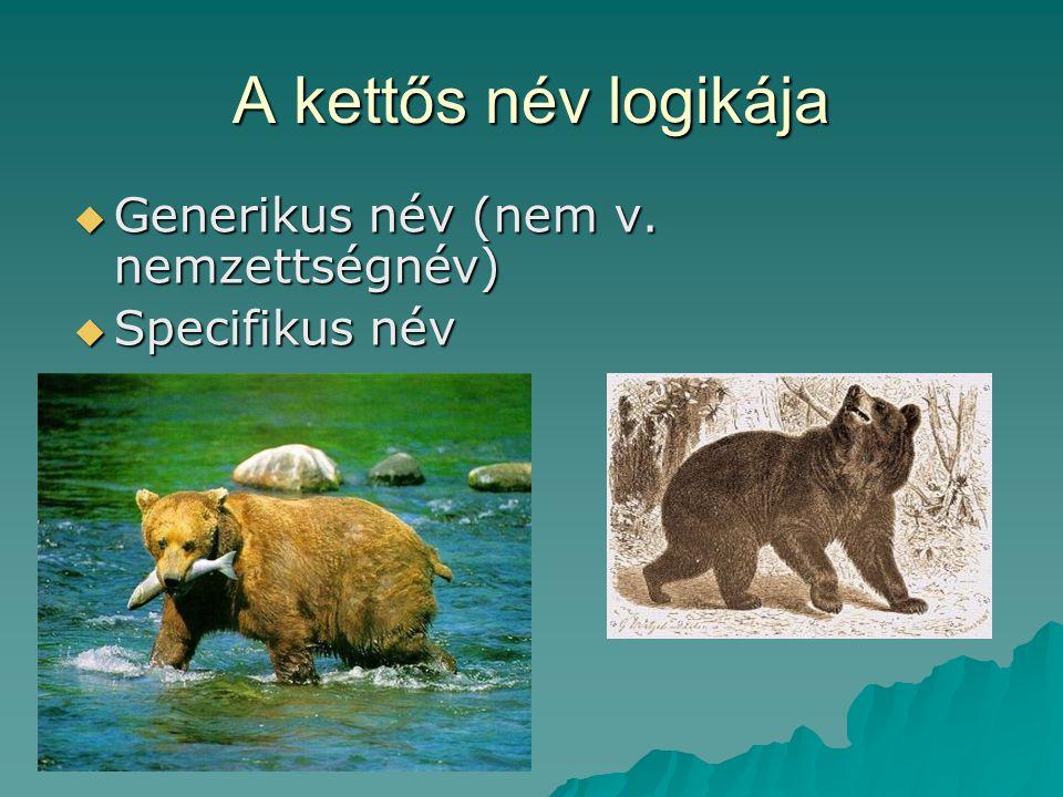 A kettős név logikája  Generikus név (nem v. nemzettségnév)  Specifikus név