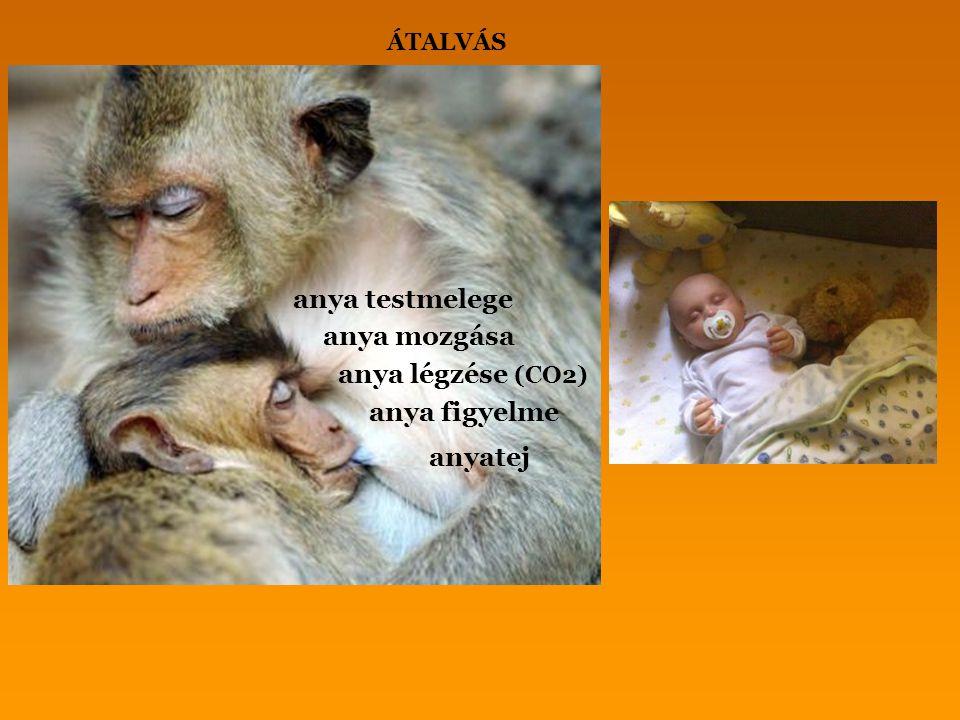 anya testmelege anya mozgása anya légzése (CO2) anyatej anya figyelme ÁTALVÁS