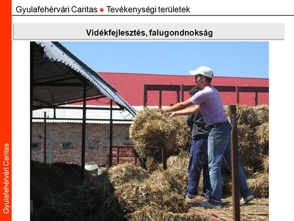 Caritas Alba Iulia Gyulafehérvári Caritas Gyulafehérvári Caritas ● Tevékenységi területek Vidékfejlesztés, falugondnokság