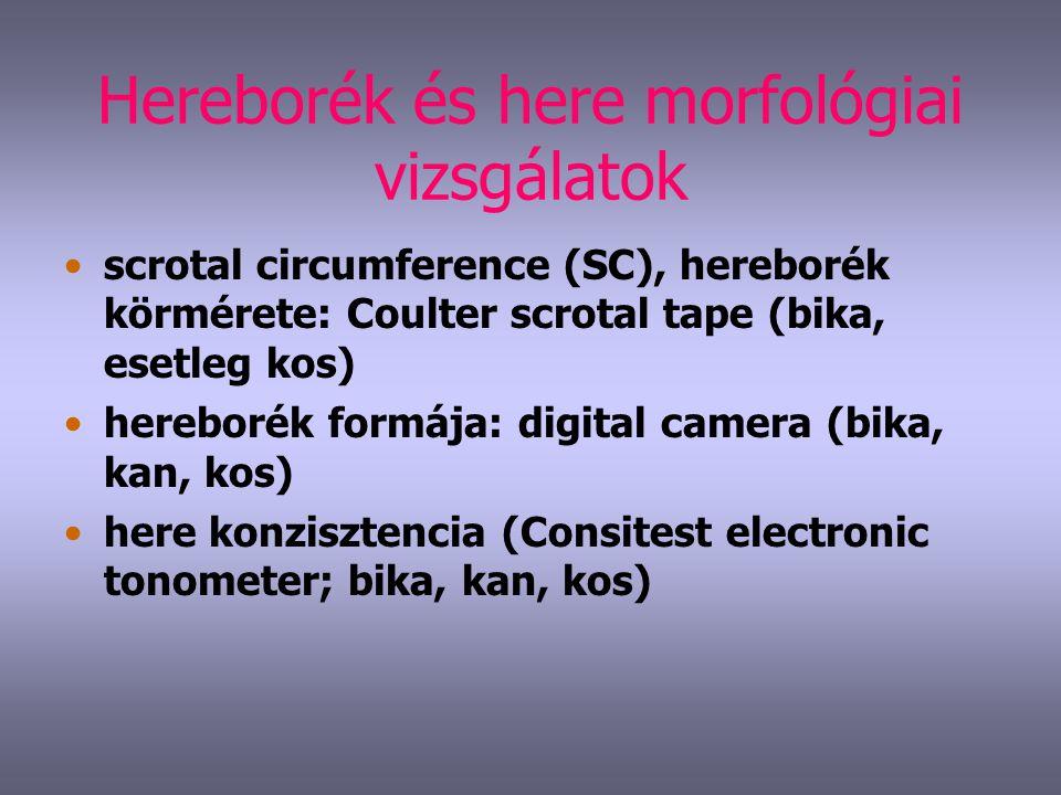 Hereborék és here morfológiai vizsgálatok scrotal circumference (SC), hereborék körmérete: Coulter scrotal tape (bika, esetleg kos) hereborék formája: