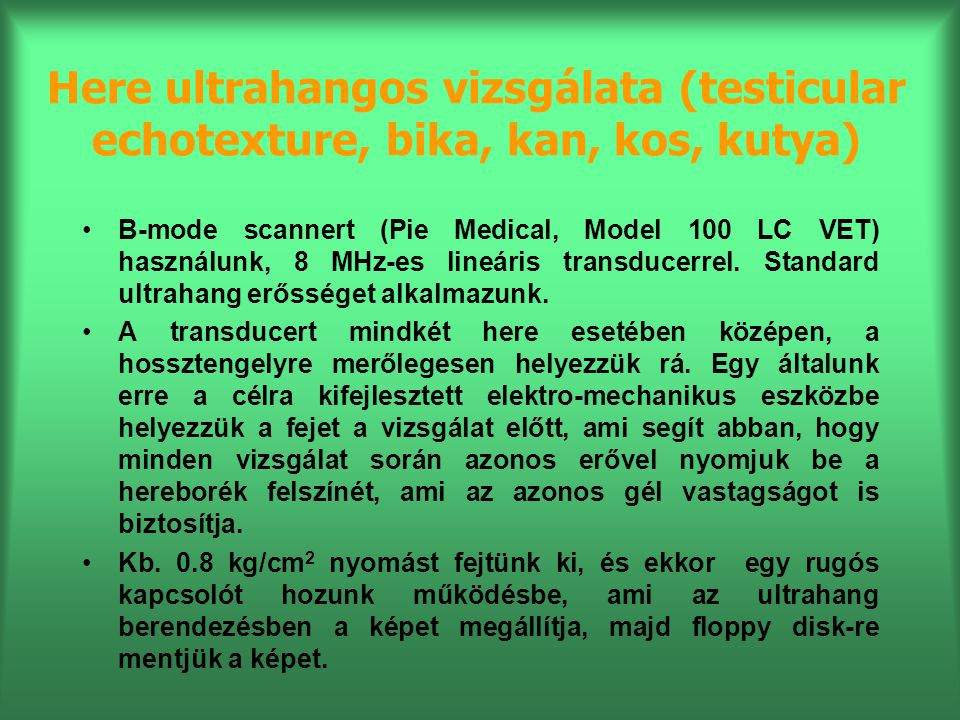 Here ultrahangos vizsgálata (testicular echotexture, bika, kan, kos, kutya) B-mode scannert (Pie Medical, Model 100 LC VET) használunk, 8 MHz-es lineá