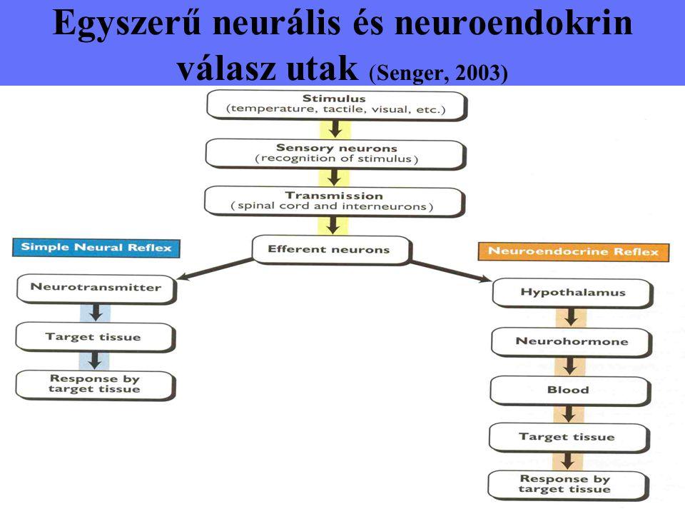 Egyszerű neurális és neuroendokrin válasz utak (Senger, 2003)