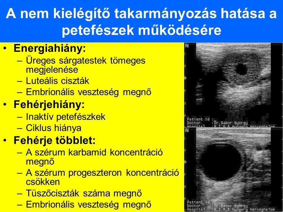 A nem kielégítő takarmányozás hatása a petefészek működésére Energiahiány: –Üreges sárgatestek tömeges megjelenése –Luteális ciszták –Embrionális vesz