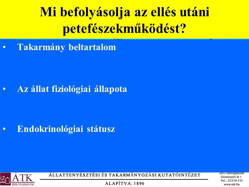 Alaptakarmányok Fejadag Vályúminta Állat (termelés, kondíció, anyagforgalom) Anyagforgalmi profilvizsgálatok sz.a.