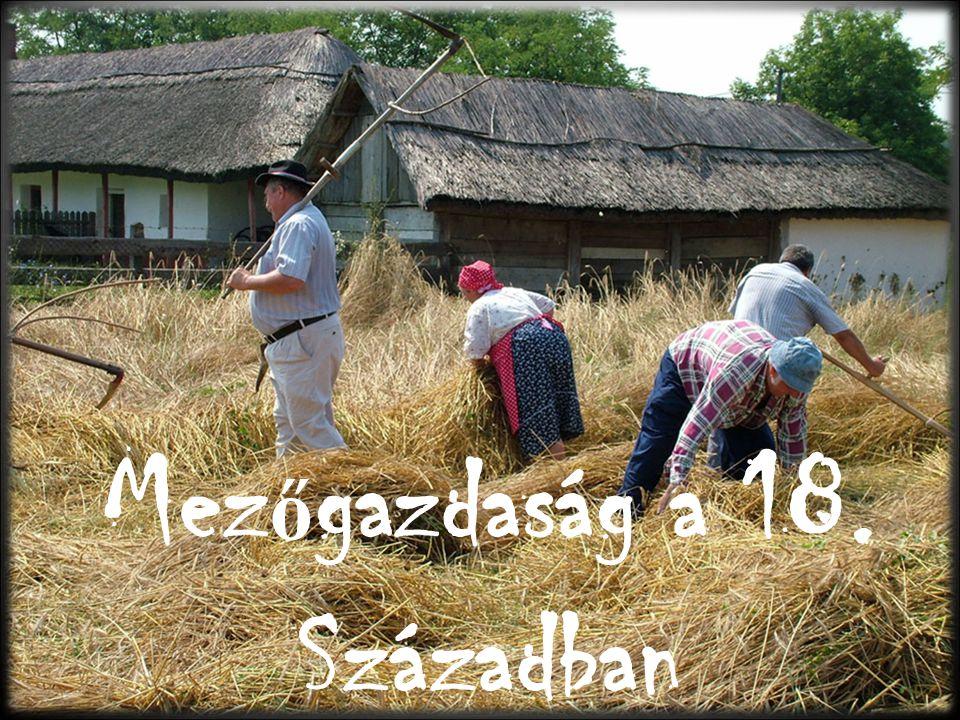 VégeVége ~ Készítette: László Réka 11/F 2009.10.30.