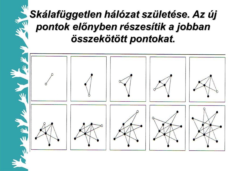 Skálafüggetlen hálózat születése. Az új pontok előnyben részesítik a jobban összekötött pontokat.