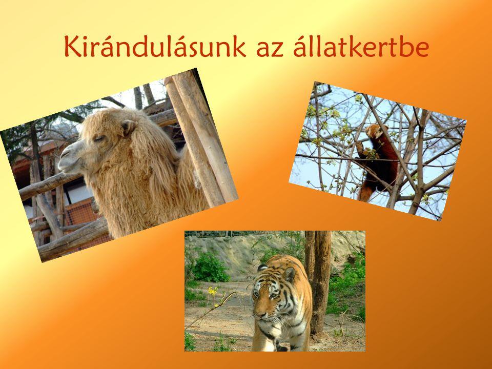 Kirándulásunk az állatkertbe