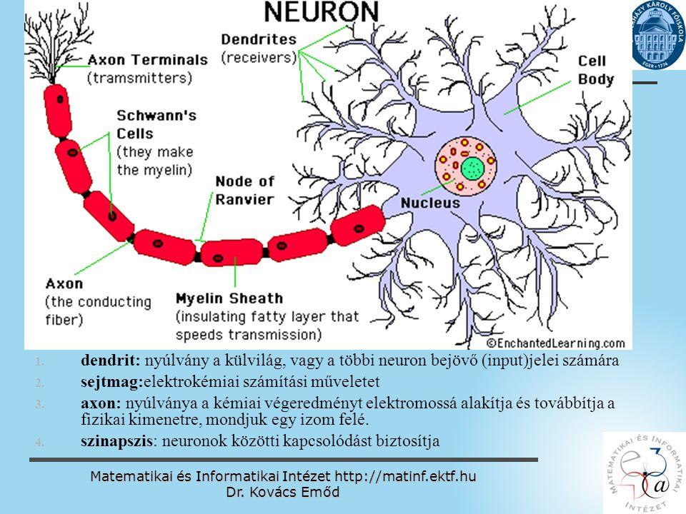 Matematikai és Informatikai Intézet http://matinf.ektf.hu Dr. Kovács Emőd www.ektf.hu 1. 1. dendrit: nyúlvány a külvilág, vagy a többi neuron bejövő (