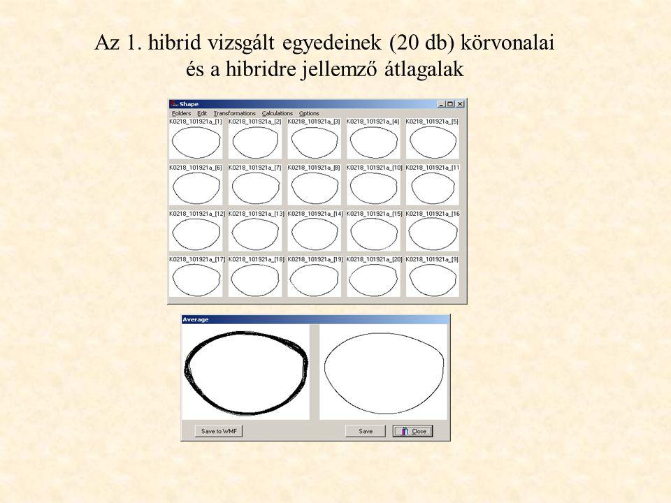 Az 1. hibrid vizsgált egyedeinek (20 db) körvonalai és a hibridre jellemző átlagalak