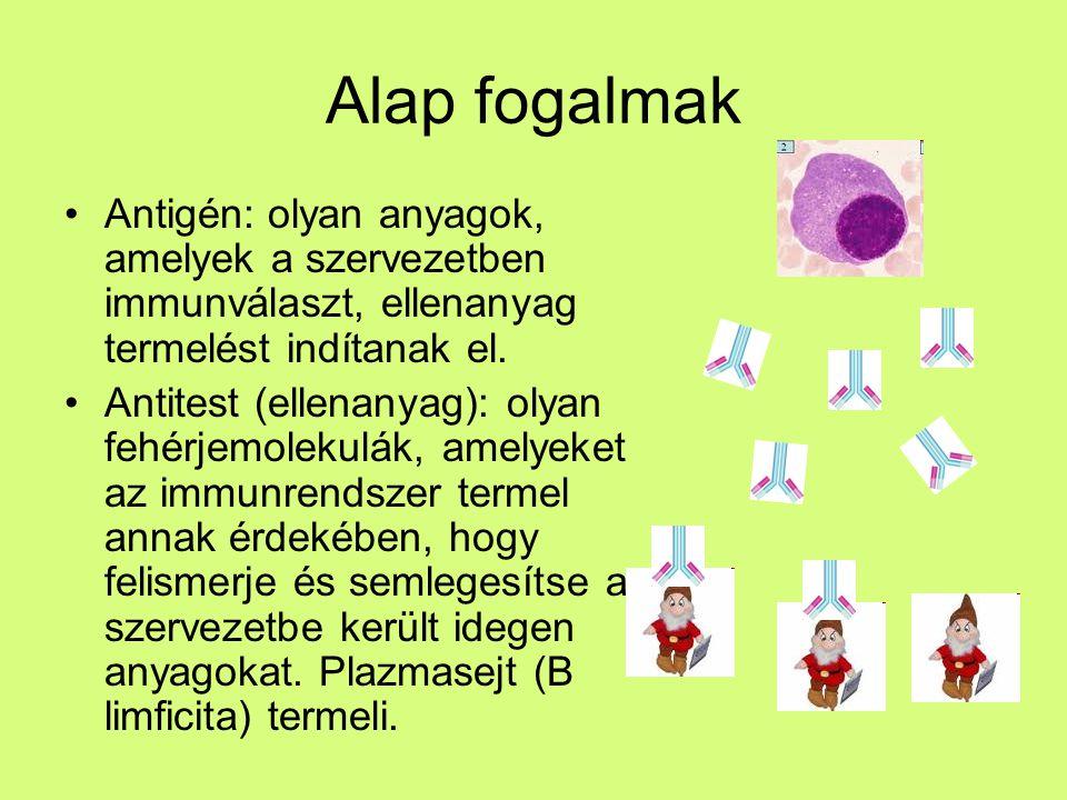 Vércsoport antigének Az méhen belüli élet 40.