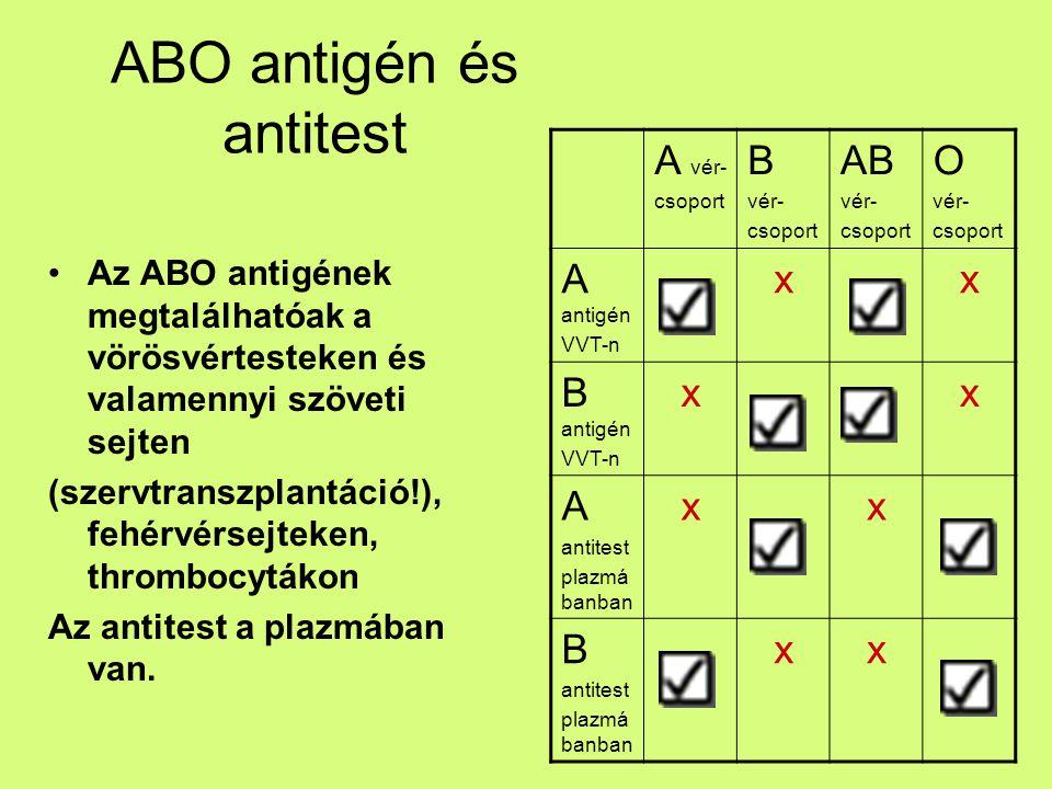 ABO öröklődés Vércsoport (fenotípus)Genotípus AAA v.