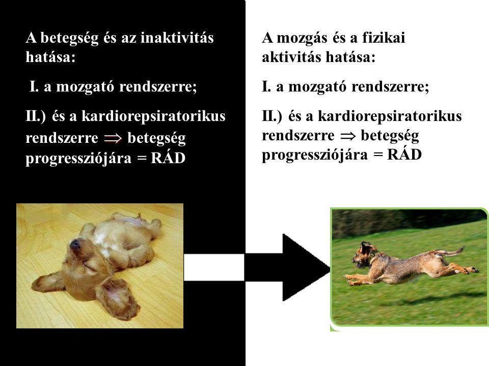 A betegség és az inaktivitás hatása: I.