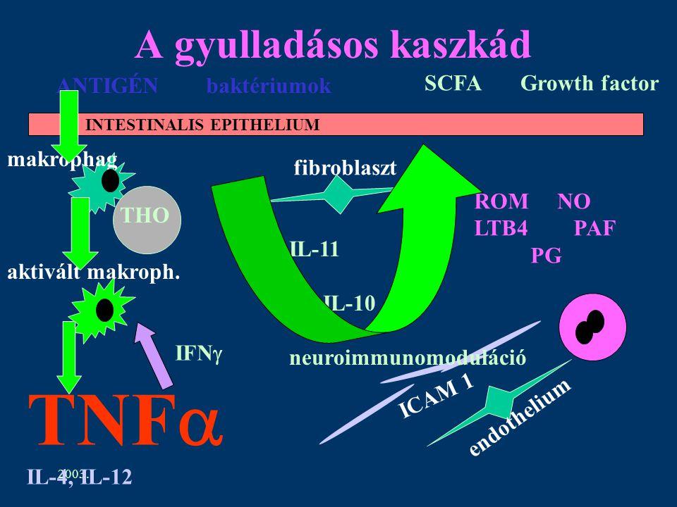2003. A gyulladásos kaszkád INTESTINALIS EPITHELIUM ANTIGÉN baktériumok makrophag THO aktivált makroph. SCFA Growth factor fibroblaszt ICAM 1 endothel
