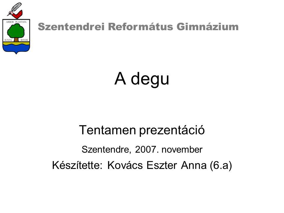 A degu Tentamen prezentáció Szentendre, 2007.