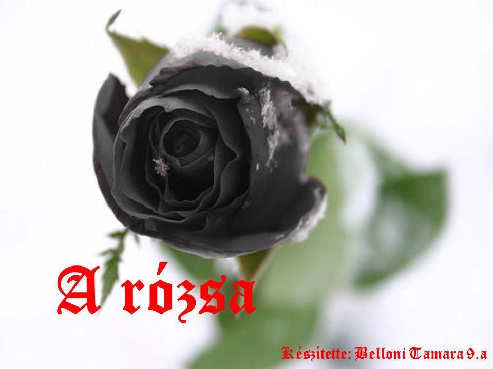 A rózsa Készítette: Belloni Tamara 9.a