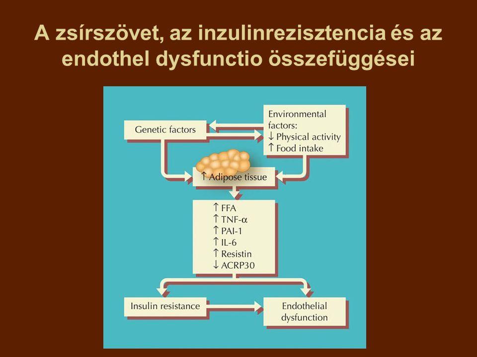 A zsírszövet, az inzulinrezisztencia és az endothel dysfunctio összefüggései