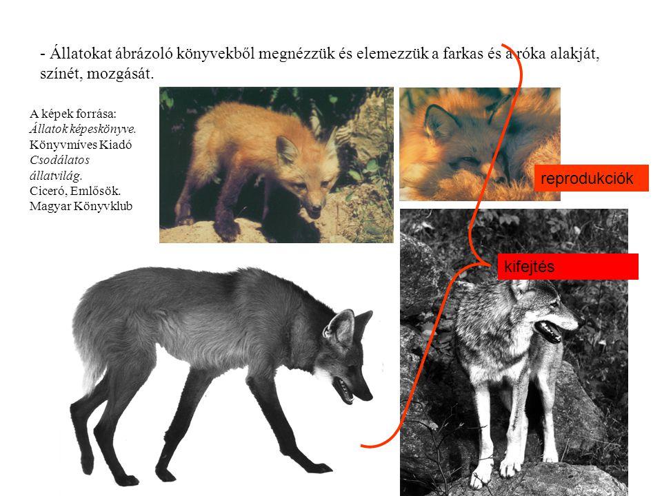 - Állatokat ábrázoló könyvekből megnézzük és elemezzük a farkas és a róka alakját, színét, mozgását. A képek forrása: Állatok képeskönyve. Könyvmíves