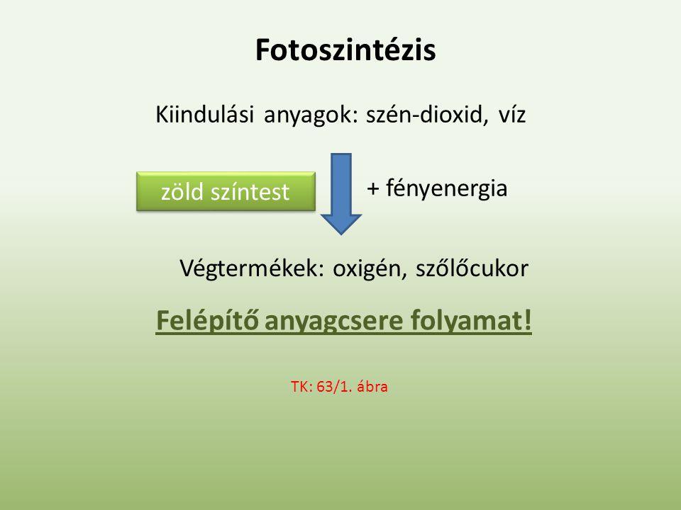Fotoszintézis Kiindulási anyagok: szén-dioxid, víz + fényenergia zöld színtest Végtermékek: oxigén, szőlőcukor TK: 63/1.