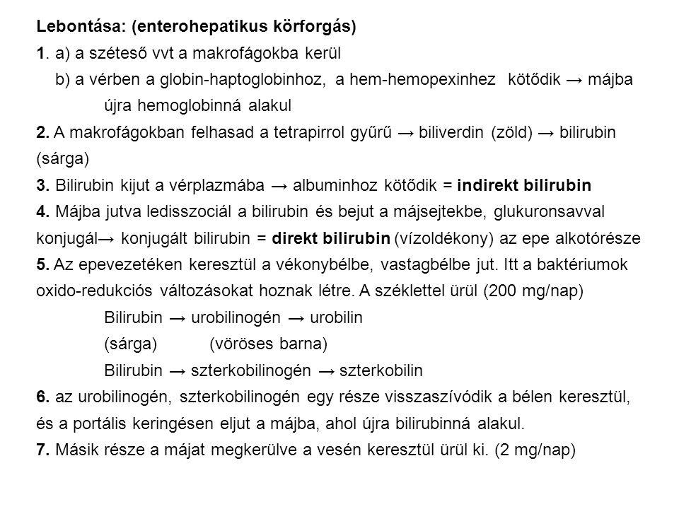 Lebontása: (enterohepatikus körforgás) 1. a) a széteső vvt a makrofágokba kerül b) a vérben a globin-haptoglobinhoz, a hem-hemopexinhez kötődik → májb