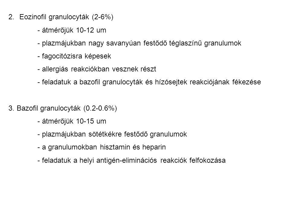 2.Eozinofil granulocyták (2-6%) - átmérőjük 10-12 um - plazmájukban nagy savanyúan festődő téglaszínű granulumok - fagocitózisra képesek - allergiás r