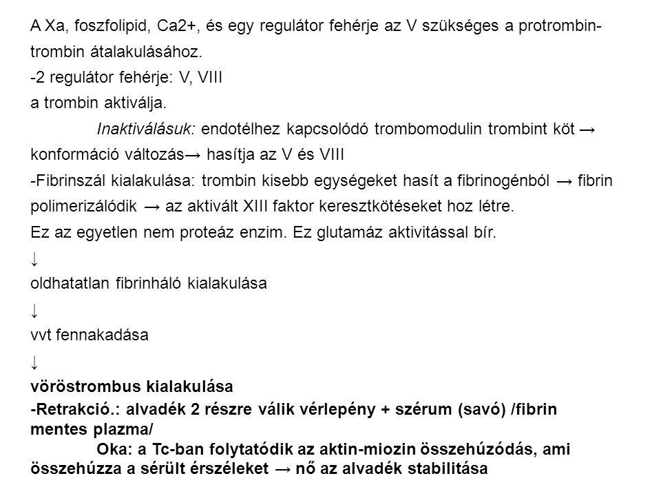 A Xa, foszfolipid, Ca2+, és egy regulátor fehérje az V szükséges a protrombin- trombin átalakulásához. -2 regulátor fehérje: V, VIII a trombin aktivál
