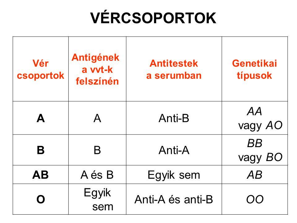 Vér csoportok Antigének a vvt-k felszínén Antitestek a serumban Genetikai típusok AAAnti-B AA vagy AO BBAnti-A BB vagy BO ABA és BEgyik semAB O Egyik