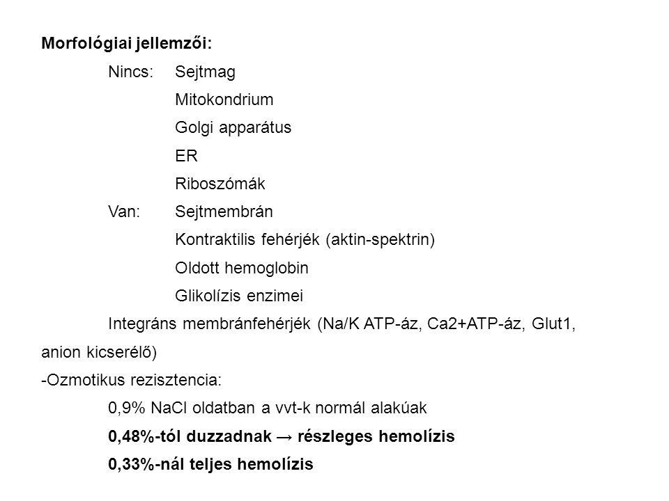 Morfológiai jellemzői: Nincs: Sejtmag Mitokondrium Golgi apparátus ER Riboszómák Van: Sejtmembrán Kontraktilis fehérjék (aktin-spektrin) Oldott hemogl